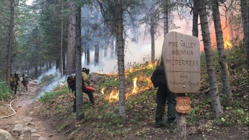 Photo courtesy of U.S. Forest Service  Crews work to set controlled back fires to deny the Saddle Wildfire fuel to spread beyond its nearly 2,300-acre size.