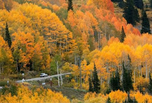 Steve Griffin | The Salt Lake Tribune   Trees glow with color as rain falls in Albion Basin near Alta, Utah Monday September 24, 2012.
