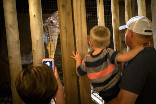 Visitors observe a diorama depicting a caged dinosaur inside a replica Noah's Ark at the Ark Encounter theme park during a media preview day, Tuesday, July 5, 2016, in Williamstown, Ky. The long-awaited theme park based on the story of a man who got a warning from God about a worldwide flood will debut in central Kentucky this Thursday. The Christian group behind the 510 foot-long wooden ark says it will demonstrate that the stories of the Bible are true. Its construction has rankled opponents who say the attraction will be detrimental to science education. (AP Photo/John Minchillo)