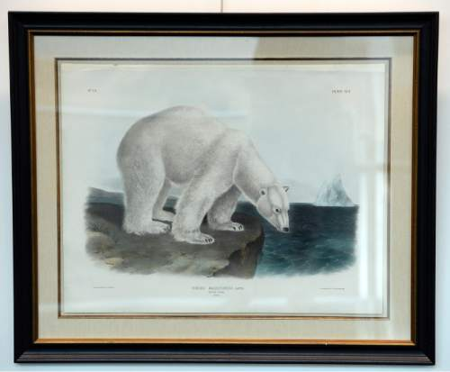 Rick Egan  |  The Salt Lake Tribune One of the 13 rare prints by the famed naturalist John J. Audubon on display starting Wednesday at the University of Utah Marriott Library.