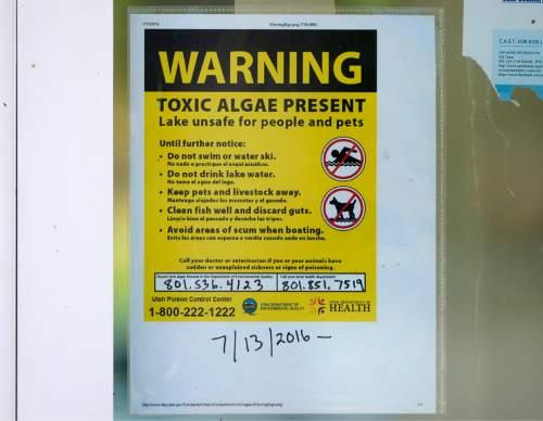 Rick Egan  |  The Salt Lake Tribune  A sign warning of toxic algae at theUtah Lake State Park, Thursday, July 14, 2016.