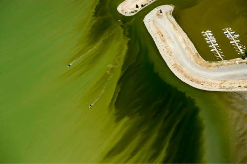 Rick Egan  |  The Salt Lake Tribune  A couple of boats mother through the discolored water in Utah Lake, near the Lindon Marina. Crews took samples of a mile-long algal bloom at Utah Lake on Wednesday evening. They'll know today if it's toxic and if they'll need to enforce closures. Thursday, July 14, 2016.