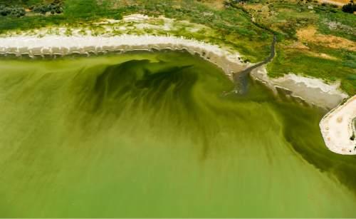 Rick Egan  |  The Salt Lake Tribune Water in Utah Lake near the Lindon Marina is discolored last week.