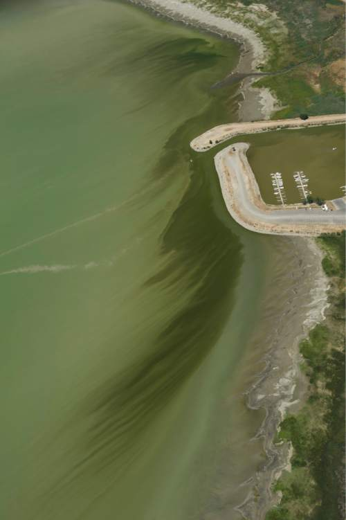 Rick Egan  |  The Salt Lake Tribune  Discolored water at Lindon Marina. Crews took samples of a mile-long algal bloom at Utah Lake on Wednesday evening. They'll know today if it's toxic and if they'll need to enforce closures. Thursday, July 14, 2016.