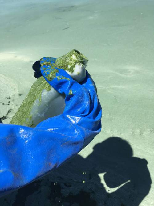 Courtesy of the Utah Department of Environmental Quality and Utah State Parks. A large toxic algal bloom is growing on the eastern shore of Utah Lake; people and pets are advised to stay out of the water.