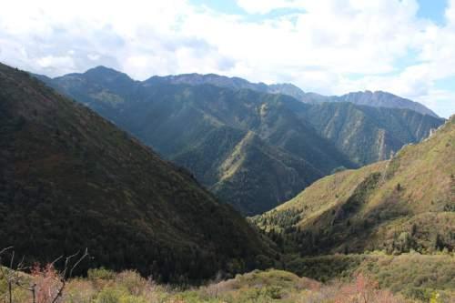 Tribune file photo The Church Fork trail to Grandeur Peak looking south toward Mill Creek Canyon.