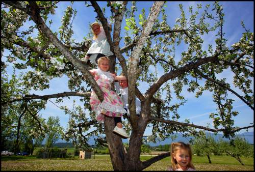 Trent Nelson  |  Tribune file photo  Four of Winston Blackmore's daughters play in a tree in Bountiful, British Columbia, 2006. Top to bottom, are Mala Blackmore, Rosa Blackmore, Maraya Blackmore, and standing on the ground is Starla Blackmore.