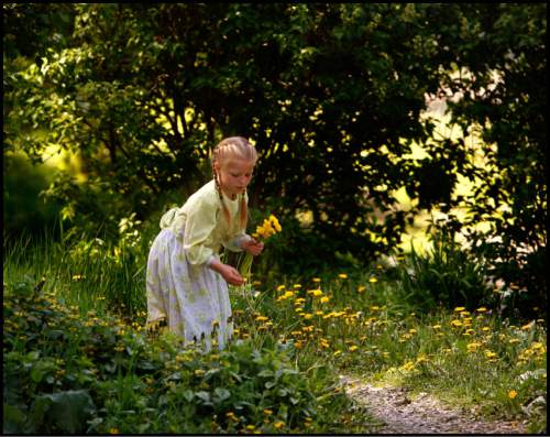 Trent Nelson  |  The Salt Lake Tribune Elsie Blackmore picking dandelions in Bountiful, British Columbia, 2006