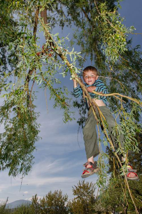 Trent Nelson  |  The Salt Lake Tribune One of Winston Blackmore's sons rides a rope swing in Bountiful, British Columbia, 2006.
