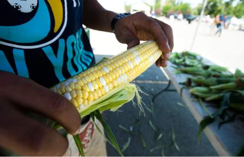 Steve Griffin / The Salt Lake Tribune  Logan Day, of Day Farms n Layton, holds a piece of freshly cut corn as he sells the last of his corn as the Farmers Market in Murray Park opened for its 35th season in Murray Friday July 29, 2016, making it Utah's oldest farmers market.  All but 14 of the 70 vendors grow their own produce.