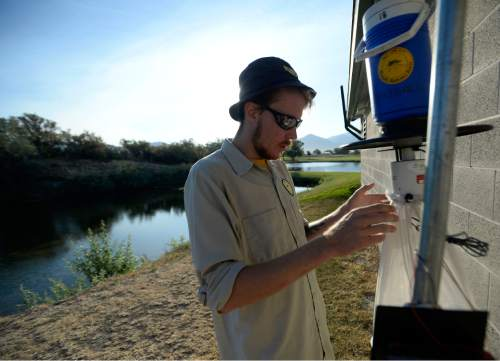 Al Hartmann  |  The Salt Lake Tribune  Tyler Gilvarry, a research intern collects a misquito trap at Glendale Golf Course  in Salt Lake City Tuesday Aug. 16.  It is a general misquito trap that uses CO2 to attract misquitos.  It is not the specific trap used to trap the Aedes Aegypti, the Zika carrying misquito.  The Salt Lake City Mosquito Abatement District does not have enough of Aedes Aegytpti traps to effectively cover their whole jurisdiction.