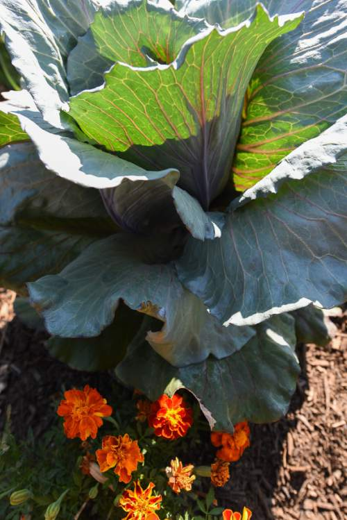 Liberty Wells Garden Grows Fruit Veggies And Community The Salt