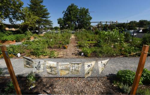 Francisco Kjolseth   The Salt Lake Tribune The first harvest of the community garden in the Liberty Wells neighborhood is celebrated on Tuesday, Aug. 30, 2016. As the latest addition to Salt Lake City's Green City Growers program, the Liberty Wells Garden at 1700 S. 700 E. is run by the non-profit Wasatch Community Gardens on city-owned land and provides plots for 44 gardeners to grow vegetables. The site is also where four resettled refugee families from Sudan and Bhutan grow vegetables through an innovative partnership between Wasatch Community Gardens and the International Rescue Committee (IRC).