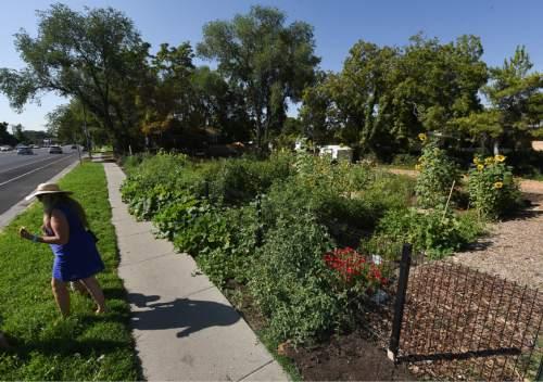 Liberty Wells garden grows fruit, veggies and community - The Salt ...