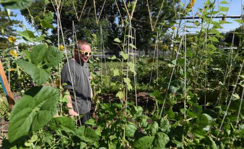 Francisco Kjolseth   The Salt Lake Tribune Eric Anderson, a fan of sunflowers and neighbor to the Liberty Wells Garden, gets a closer look on Tuesday, Aug. 30, 2016. As the latest addition to Salt Lake City's Green City Growers program, the Liberty Wells Garden at 1700 S. 700 E. is run by the non-profit Wasatch Community Gardens on city-owned land and provides plots for 44 gardeners to grow vegetables. The site is also where four resettled refugee families from Sudan and Bhutan grow vegetables through an innovative partnership between Wasatch Community Gardens and the International Rescue Committee (IRC).