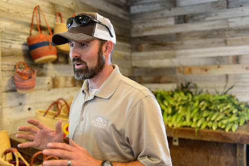 Trent Nelson     The Salt Lake Tribune Luke Petersen grows three different kinds of popcorn ó yellow, red and blue/purple ó that customers can buy still on the cob at his family's Peterson Family Farm in Riverton.