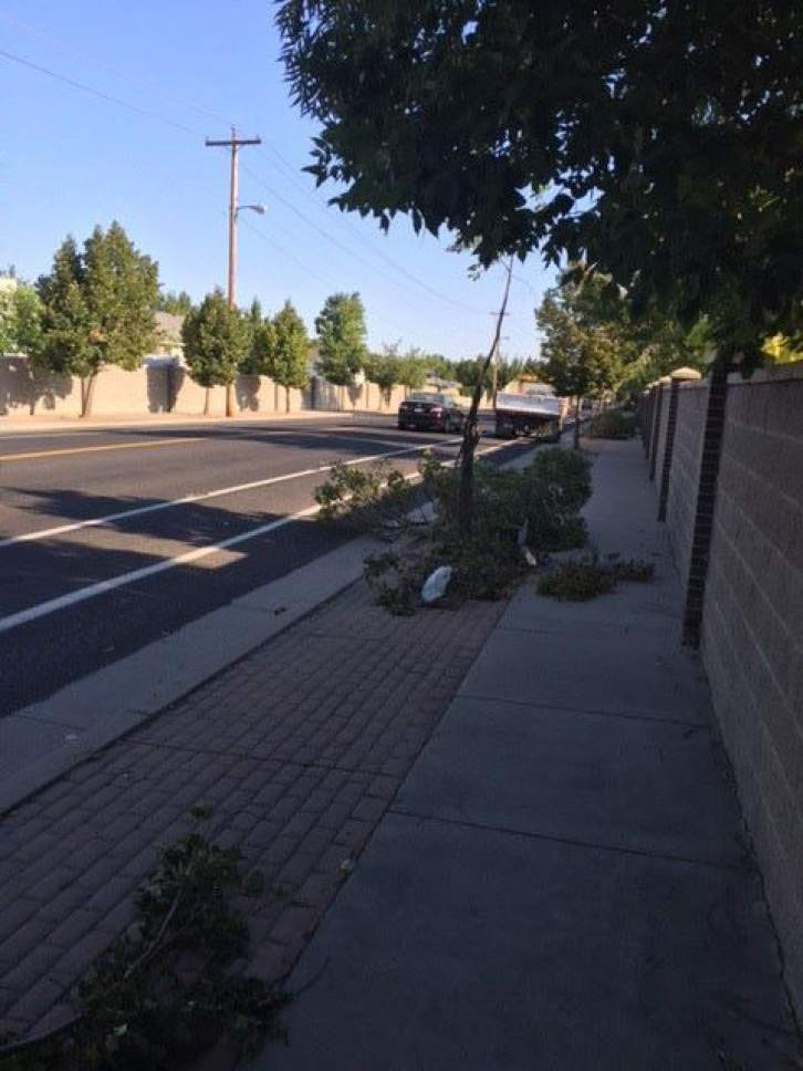 Courtesy  |  West Jordan  West Jordan police were investigating a string of felled trees found throughout the city.