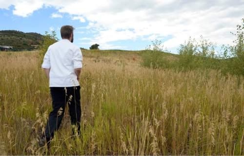 Al Hartmann     The Salt Lake Tribune Executive Chef Ryker Brown walks across fields near Park City's Waldorf Astoria to check on his beehives.