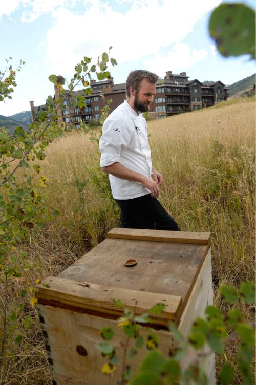 Al Hartmann     The Salt Lake Tribune Ryker Brown, executive chef at the Waldorf Astoria in Park City, checks on his beehives near the resort.