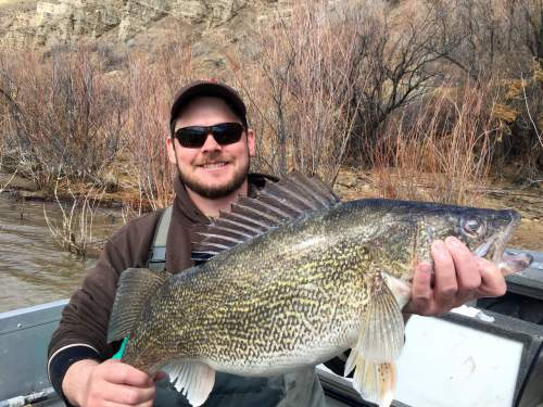 Natalie Boren  |  Utah Division of Wildlife Resources The Utah Division of Wildlife Resources says walleye were introduced illegally into Echo Reservoir.