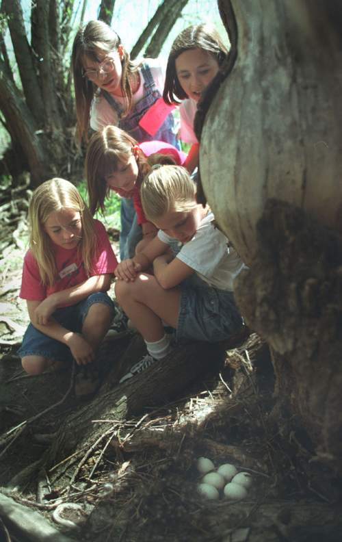 Tribune file photo Megan MeMerrill, left, Lauren Piper, middle Katrina Smithee, left rear, Erin Smithee, and Lauren Robbins, students from Beacon Heights Elementary find a nest of duck eggs along the stream bank during an outing at Hidden Hollow in 1998.