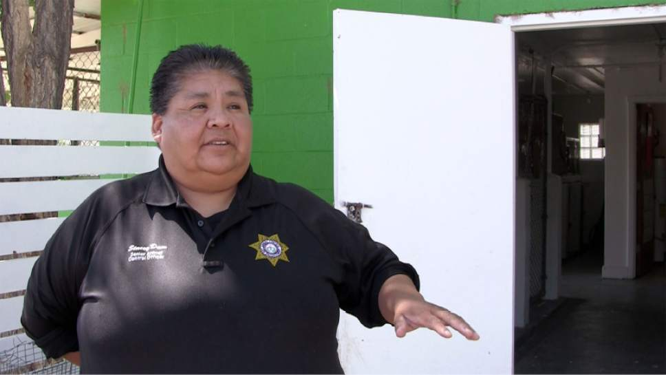 Rich Kane  |  The Salt Lake Tribune  Stacey Daw, based out of Shiprock, New Mexico, is one of only four animal control officers on Navajo Nation, an area the size of West Virginia.