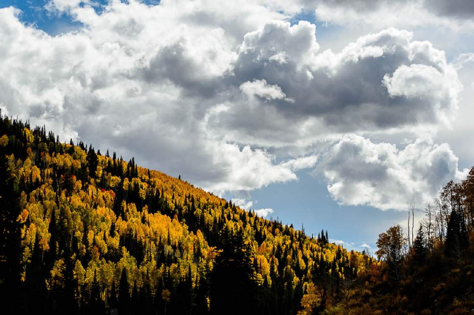 Trent Nelson  |  The Salt Lake Tribune The Manti-La Sal National Forest east of Fairview, Thursday September 29, 2016. Utah's national forests are beginning to develop new management plans, which is stirring up controversy as some think the plans are fronts for expanding wilderness or restricting grazing.