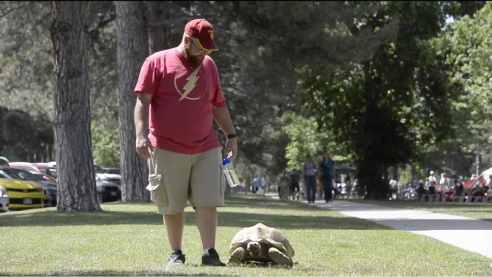 "Rick Egan  |  The Salt Lake Tribune  Mike Earl walks Sherman, his 20-year-old, 100-pound pet African sulcata tortoise in Liberty Park. Watch video of Sherman in the Tribune's ""I Love"" series at ilove.sltrib.com."