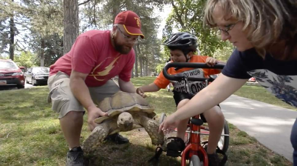 "Rick Egan  |  The Salt Lake Tribune  Mike Earl holds Sherman, his 20-year-old, 100-pound pet African sulcata tortoise in Liberty Park. Watch video of Sherman in the Tribune's ""I Love"" series at ilove.sltrib.com."