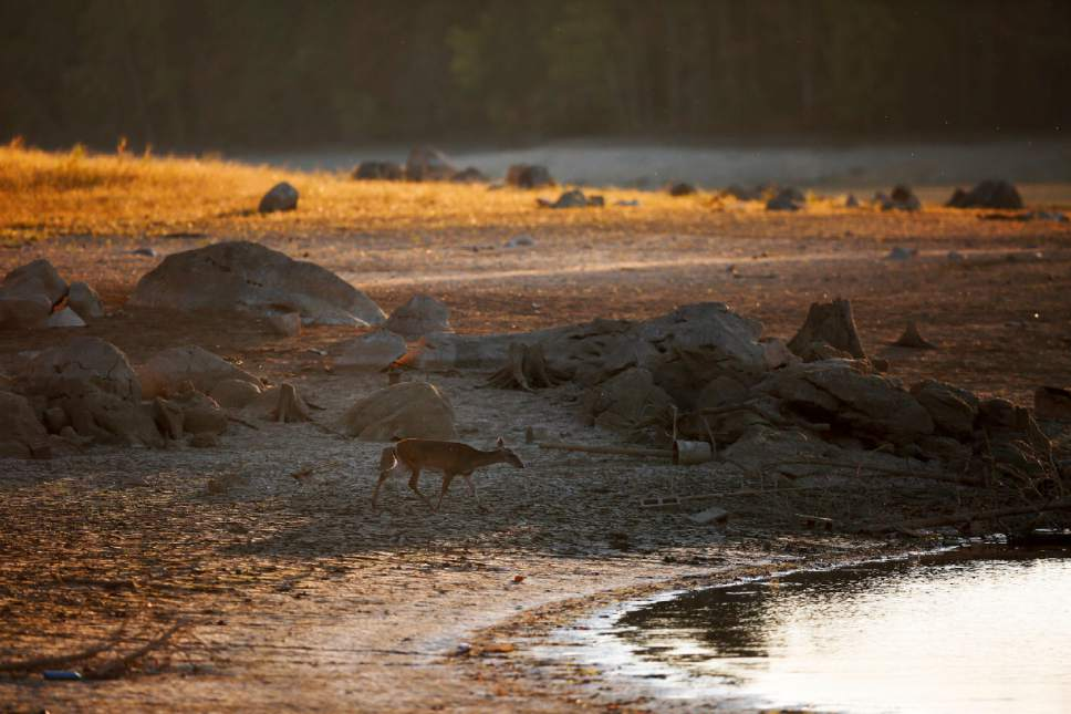 File - In this Tuesday, Oct. 11, 2016, file photo, a deer walks towards a receded Lake Purdy where water levels have dropped several feet due to a sever drought, in Birmingham, Ala. Hotter than normal temperatures combined with the below normal rainfall have worsened drought conditions across Alabama The very worst conditions are in the mountains of northern Alabama and Georgia. (AP Photo/Brynn Anderson, File)
