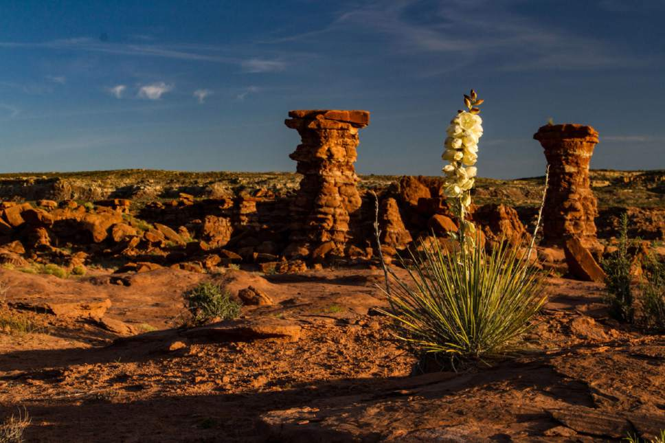Photo courtesy of Friends of Cedar Mesa EOG Resources proposes to drill exploratory wells on state and federal land near Bluff. One would be drilled near the Chimney Rocks area, pictured here on lands included in the proposed Bears Ears National Monument.