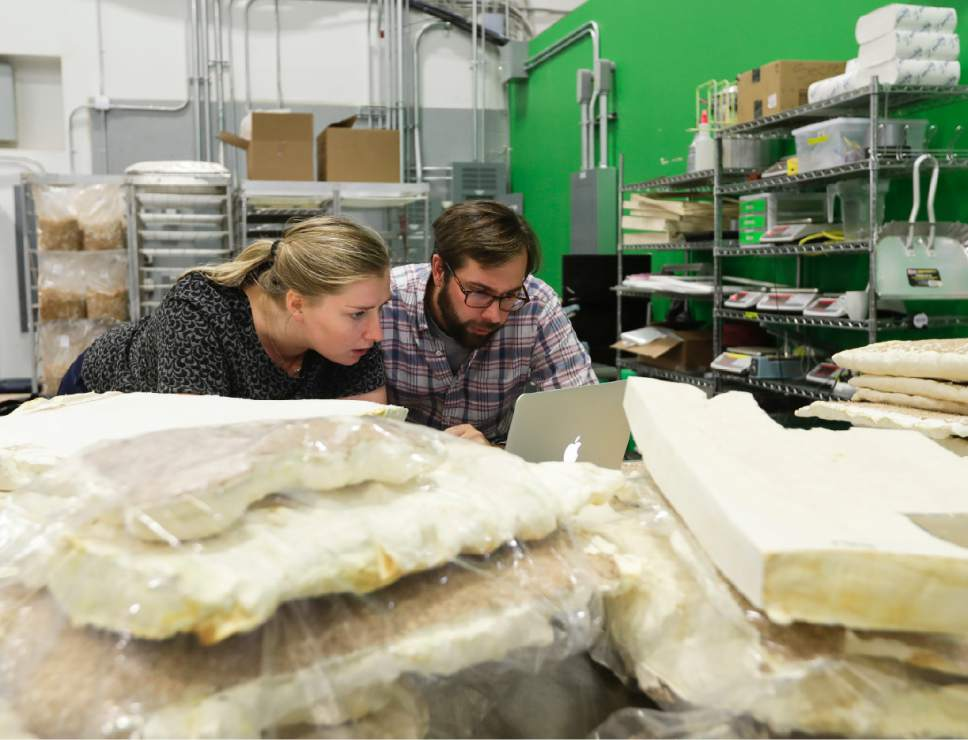 "In this Tuesday, Sept. 27, 2016 photo, Ecovative Design co-founder Gavin McIntyre works with senior research biologist Lucy Greetham at Ecovative in Green Island, N.Y. Ecovative Design is a business staking its growth on mycelium, the thread-like ""roots"" of mushrooms. The mycelium grows around small pieces of stalks and stems to create a bound-together material that can be molded into soft packaging for glassware or pressed into the boards used for the footstools they recently began selling. (AP Photo/Mike Groll)"