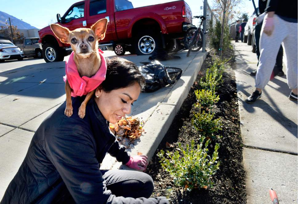 "Scott Sommerdorf   |  The Salt Lake Tribune   Lucy Ordaz and her dog ""Cosette"" volunteer with some landscaping during a work / cleanup day at the old Victorian home being renovated to house ""Encircle House"" which will be Provo's first LGBT resource center, Saturday November 19, 2016."