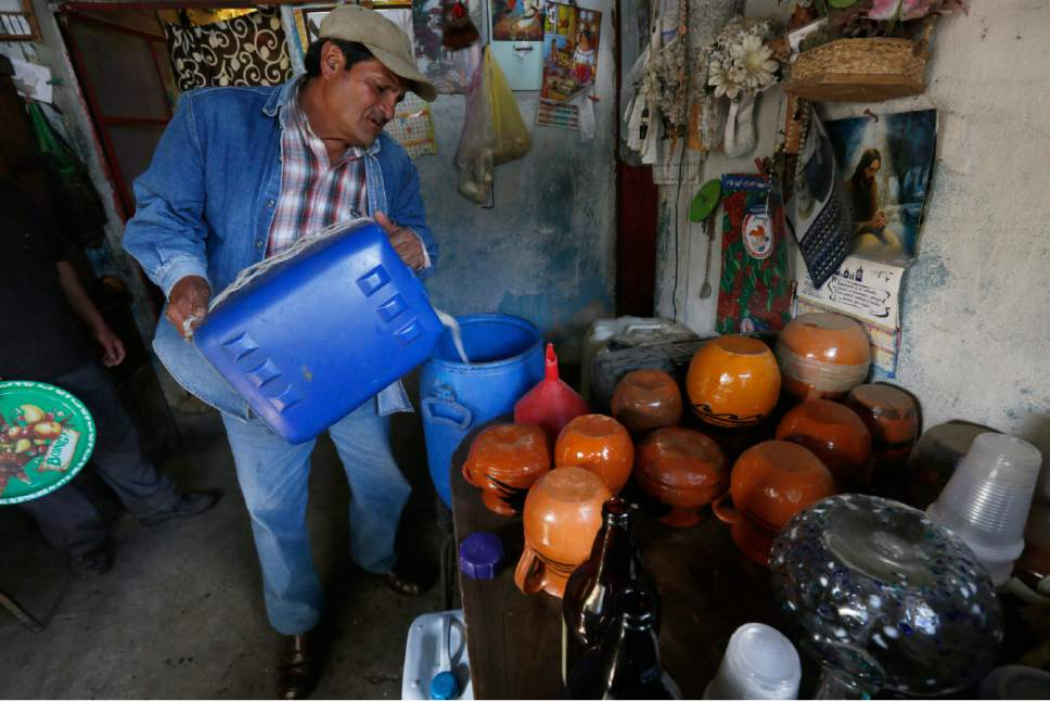 In this Nov. 30, 2016 photo, pulque producer Ramon Cruz pours the milky white liquid into a pot, in Tepotzotlan, Mexico. The liquid goes into plastic tanks to ferment. After fermentation, it's about as strong as the average beer. (AP Photo/Marco Ugarte)
