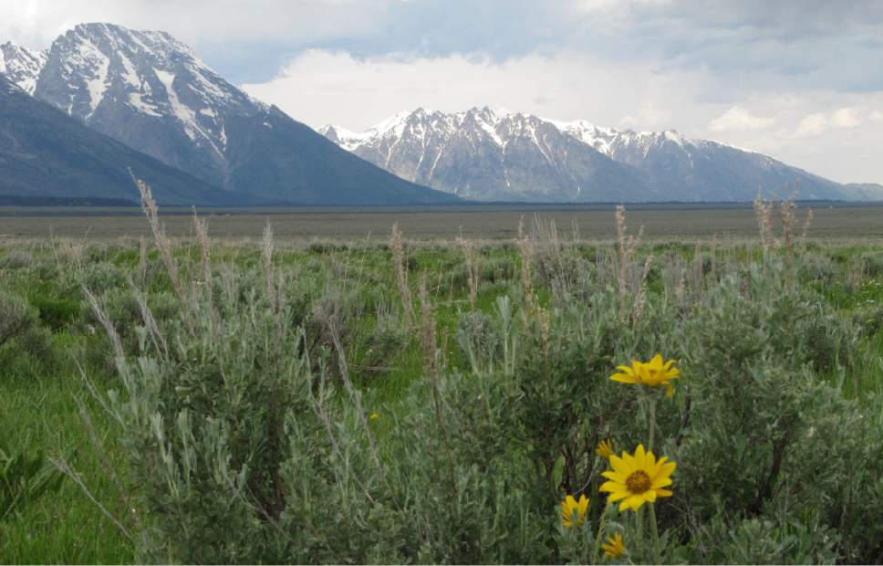 FILE - This June 24, 2010 file photo shows a view across land the state of Wyoming owns inside Grand Teton National Park. A deal between Wyoming and the Interior Department will help prevent a square mile of Grand Teton National Park from being developed by putting the property in federal hands. The $46 million sale completed Monday, Dec. 12, 2016, ends years of drama in which Wyoming officials sought to be rid of the land, for a price, while federal officials and environmentalists fretted the land could end up in private hands and potentially developed. (AP Photo/Mead Gruver, File)