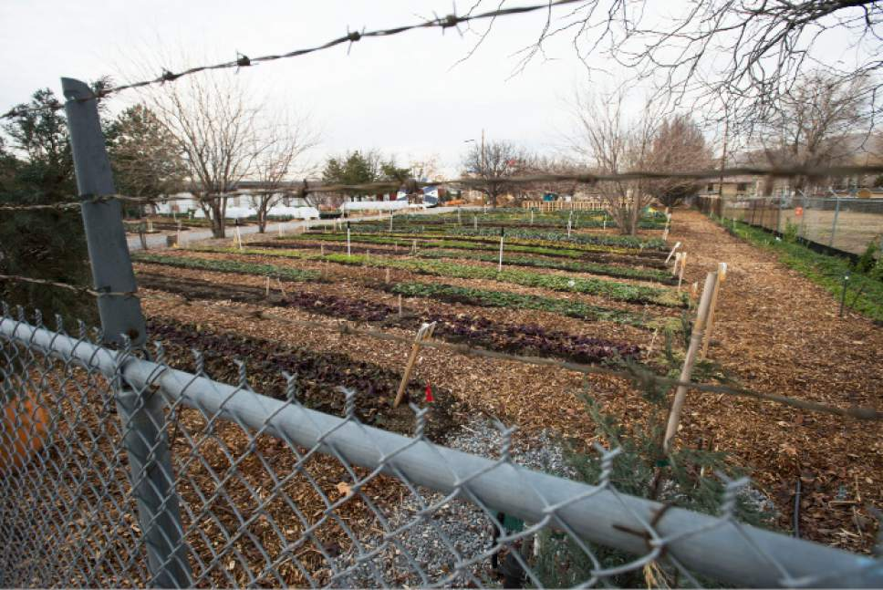 Steve Griffin / The Salt Lake Tribune   Wasatch Community Gardens at 648 west 100 south is one of the four new locations for proposed homeless shelters in Salt Lake City Tuesday December 13, 2016.