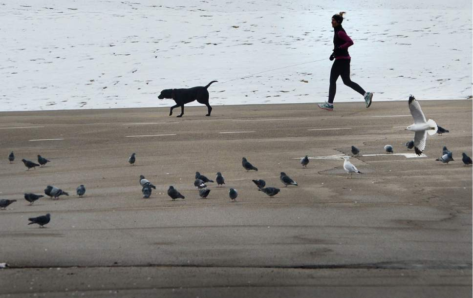 Scott Sommerdorf   |  The Salt Lake Tribune   A jogger and her dog in Sugar House Park, Wednesday, December 21, 2016.