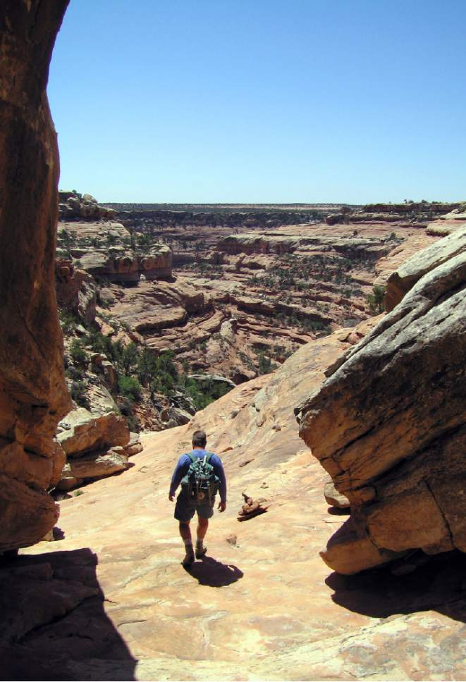 Al Hartmann  |  The Salt Lake Tribune  Hiker decends into one of the dozens of sandstone canyons on Cedar Mesa in San Juan County.  The area is included for a proposed Bears Ears National Monument.