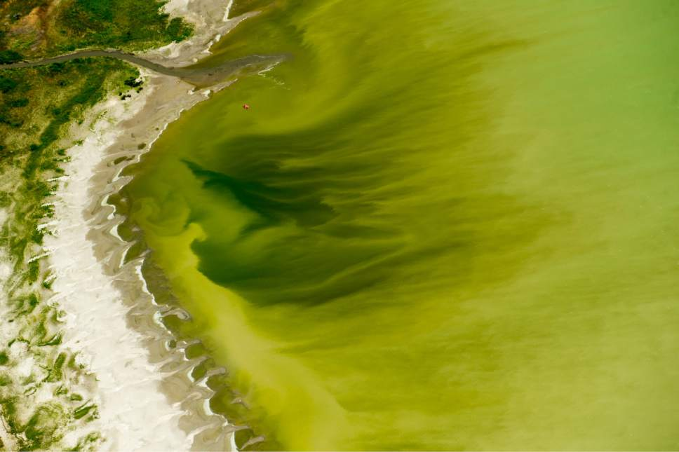 Tribune file photo A mile-long algal bloom is seen in Utah Lake near the Lindon Marina in July 2016. A new bloom was detected in the lake last week and Utah County Health Department officials have posted warning signs in the Provo Bay and harbor area.