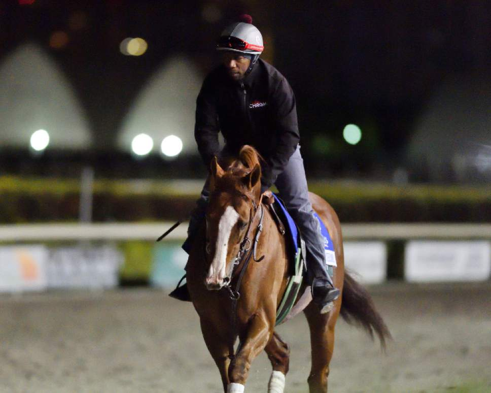 California Chrome Pares In His First Morning Workout Sunday Jan 8 2017