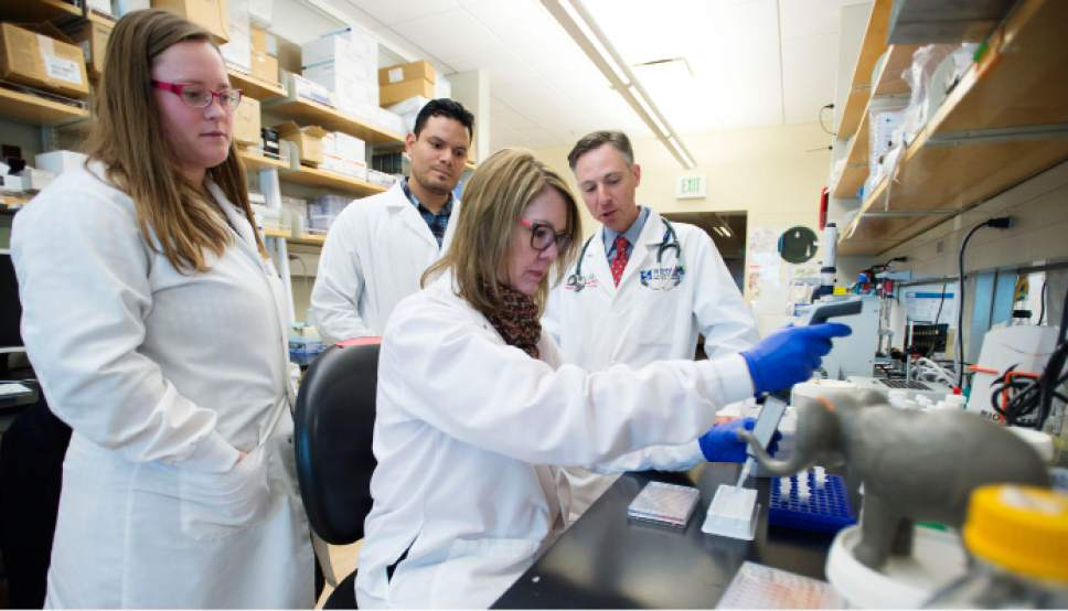 Steve Griffin / The Salt Lake Tribune  Schiffman Labs team members Lauren Donovan, lab specialist, Cristhian Toruno, lab specialist, Lisa Abegglen, PhD instructor and Dr. Joshua Schiffman, have spent the past year testing the elephant p53 (EP53) in human cancer cells at the Huntsman Cancer Institute  and have found that human tumor cells die very quickly when exposed to the EP53. They have teamed up with Dr. Avi Schroeder from Tehnion-Israel Institute of Technology, a chemical engineer, to manufacture EP53 protein nanoparticles to begin preclinical testing. The team was photographed at the Huntsman Cancer Institute in Salt Lake City Friday January 6, 2017.