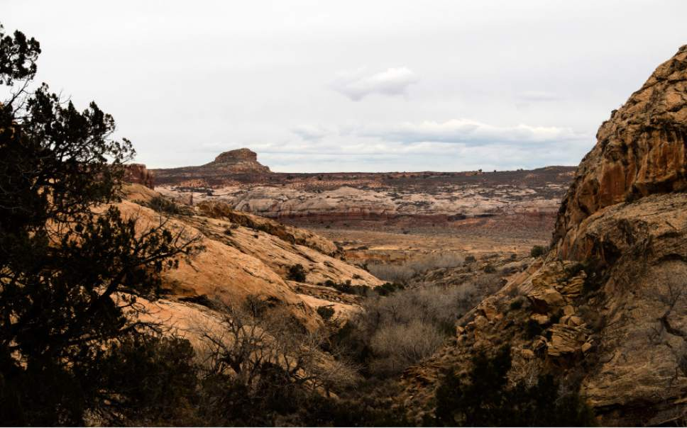 Rick Egan  |  The Salt Lake Tribune  The Butler Wash, where Mary Benally spent a year of her childhood east of Comb Ridge in Bears Ears National Monument. Thursday, January 12, 2017.