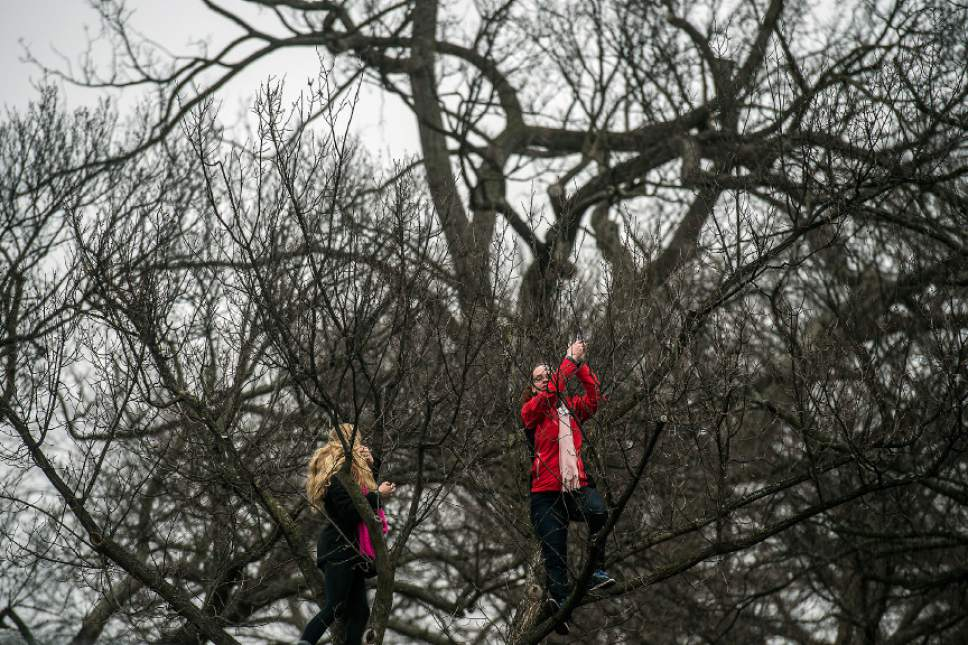 Chris Detrick  |  The Salt Lake Tribune Attendees climb trees during the Women's March on Washington at the National Mall Saturday January 21, 2017.