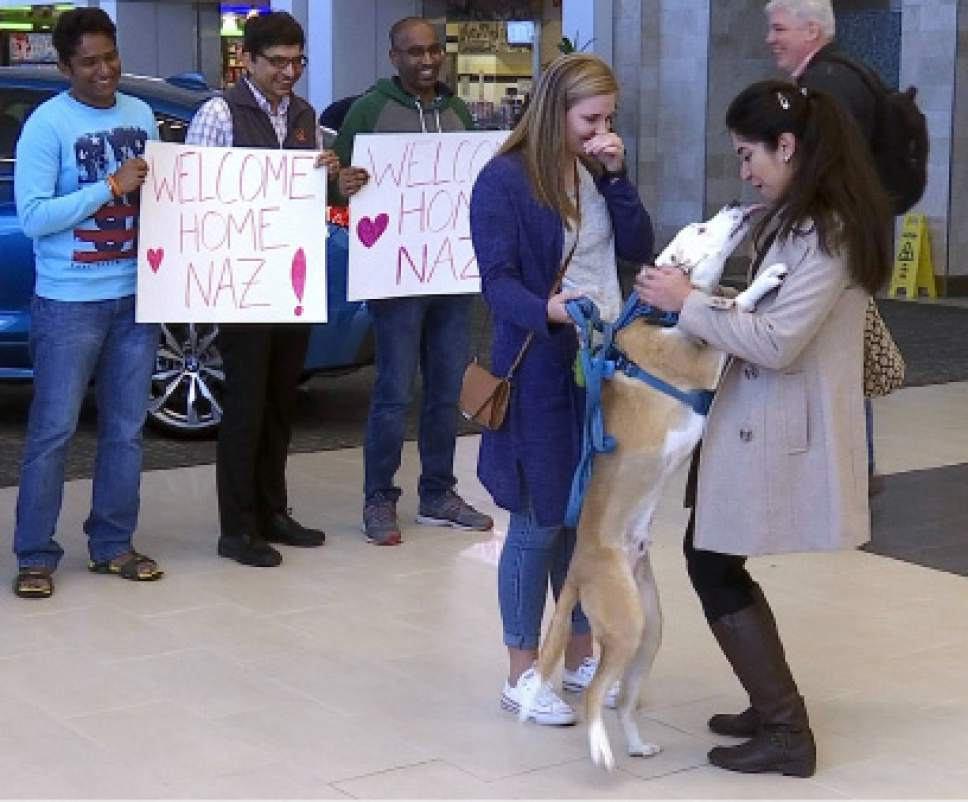 "Nazanin Zinouri, 29, is greeted at the Greenville-Spartanburg International Airport in Greer, S.C., with kisses from her dog Dexter and well-wishers holding signs reading ""Welcome Home"" on Monday, Feb. 6, 2017. Zinouri, an Iranian engineer and Clemson University graduate, had been unable to return to the United States because of the executive order President Donald Trump signed that limited travel to the U.S. from seven Muslim-majority countries. (AP Photo/Alex Sanz)"