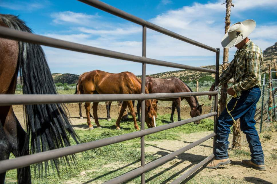 Chris Detrick  |  The Salt Lake Tribune Dave Treanor works with his horses in Escalante Wednesday July 29, 2015.  Erin and Dave Treanor own Rising DT Ranch Horse Tours and provide horseback tours around the Grand Staircase National Monument.