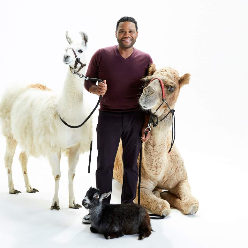 "Anthony Anderson hosts ""Animal Nation,"" an animal-centric talk show on Animal Planet. Courtesy  
