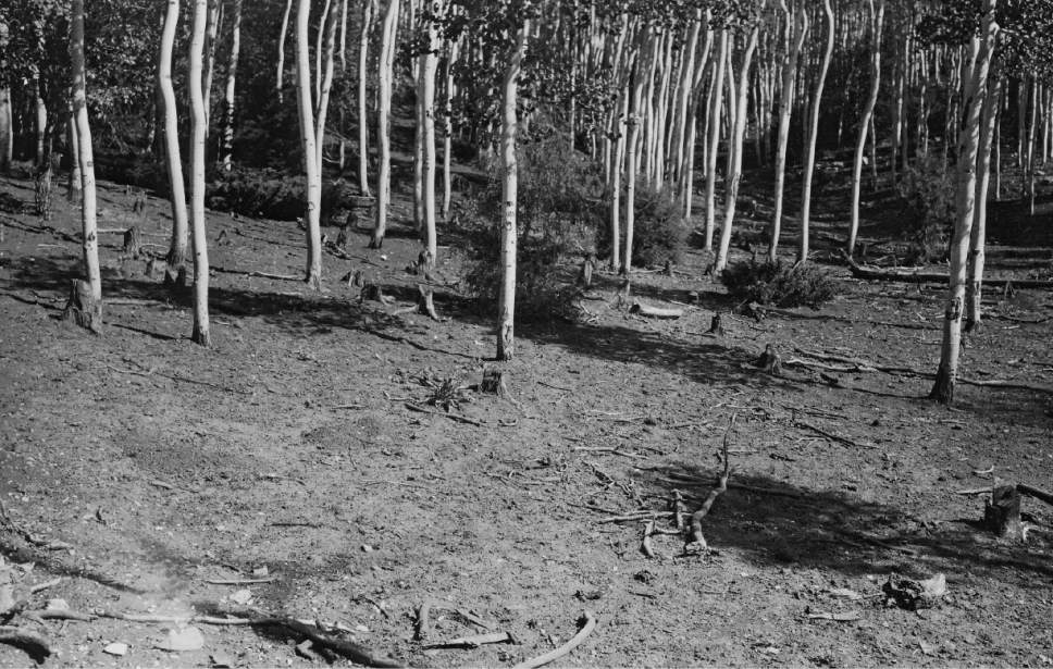 Parts of what became the Manti-La Sal National Forest were so overgrazed in the early 1900s that local residents asked the Forest Service to take over management.   Courtesy photo