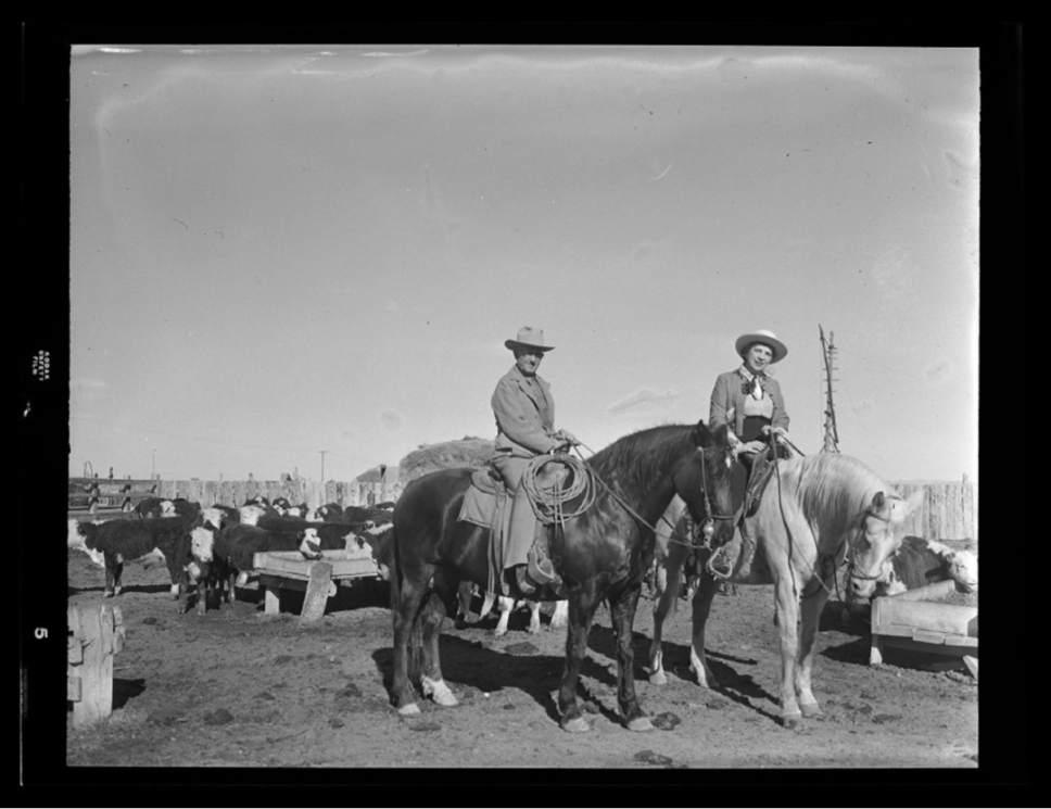 photo courtesy Utah Historical Society  A couple tends to their cattle in 1956.