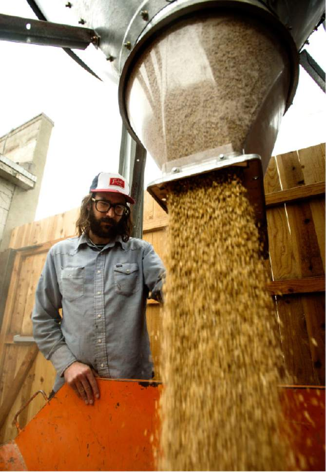 Steve Griffin  |  The Salt Lake Tribune   Colby Frazier prepares grain for brewing at the new A. Fisher Brewing Co. in Salt Lake City on Friday, Feb. 17, 2017.