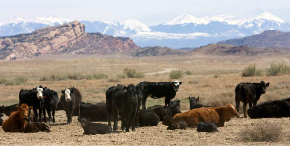 Al Hartmann      The Salt Lake Tribune  The 10 state-inspected slaughterhouses in Utah handled more than 21,000 animals between July 2012 and December 2014. Most were cattle, but pigs, goats, lamb, elk, deer and occasionally bison are processed. A new report questions the effectiveness of the state's slaughterhouse inspections.